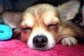 愛犬の吐血!症状か…の画像