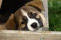 愛犬の体のしこりや…の画像