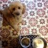 犬の食事のしつけで…の画像