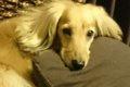 犬にまつわるパニク…の画像