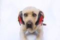 犬が音に敏感に反応…の画像
