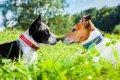 犬同士の挨拶 5つの…の画像