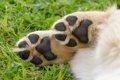 犬の肉球が傷つく原…の画像