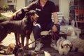 先住犬とトラブル!…の画像