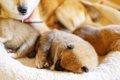 愛犬の子供がほしい…の画像