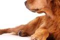 犬の反抗期について…の画像