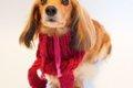 犬用防寒グッズの7選…の画像