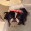 愛犬の健康・長生き…の画像
