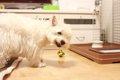 犬の便秘解消法!~…の画像