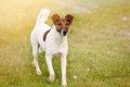 犬の霊感を、あなた…の画像