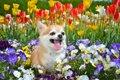 犬にユリ科の植物は…の画像