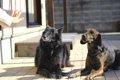 犬が使われている漢…の画像