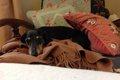 犬も関節リウマチに…の画像