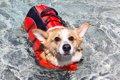 犬用ライフジャケッ…の画像