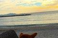 放浪犬から甘えん坊…の画像