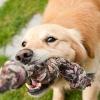 子犬のうちに噛み癖…の画像