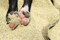 犬のアレルギー性皮…の画像