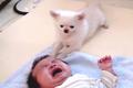 チワワが赤ちゃんを…の画像