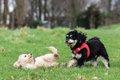 子犬をパピークラス…の画像
