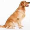犬のお留守番をしつ…の画像