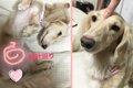 愛犬とコミュニケー…の画像