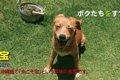 沖縄★止らない迷い犬…の画像