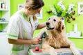 犬の美容院の選び方…の画像