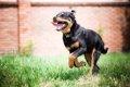 走るのが得意な犬種…の画像