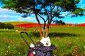 愛犬と行きたい秋の…の画像