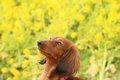 人気犬種の宿命…『犬…の画像