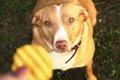 犬のトリーツがカロ…の画像