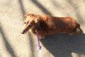 愛犬のもしもの時、…の画像