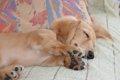 犬のヘルニアの症状…の画像