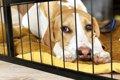 犬に絶対NGな留守番…の画像
