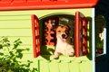 犬が「ハウス嫌い」…の画像