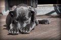 犬の腫瘍とは?その…の画像
