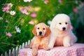 犬の疥癬の症状や予…の画像