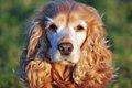 犬の認知症の末期症…の画像