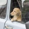 愛犬と旅行で気を付…の画像