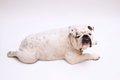 犬のメタボ診断表 …の画像