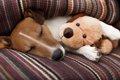 犬にぬいぐるみのお…の画像