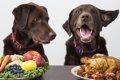 【凄い!】犬は親し…の画像