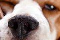 犬が鼻水を垂らすと…の画像