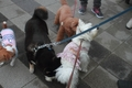 犬が物として扱われ…の画像