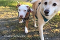 犬の社会化不足と問…の画像