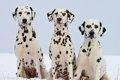 多頭飼いで犬たちの…の画像