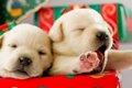 可愛い子犬の画像を…の画像