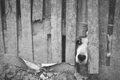 犬が脱走をする気持…の画像
