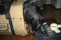 愛犬をキャリーバッ…の画像