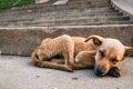 子犬の飢餓について…の画像
